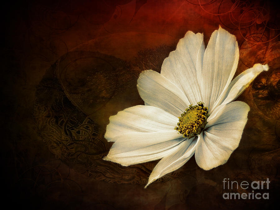 White Flower Photograph  - White Flower Fine Art Print
