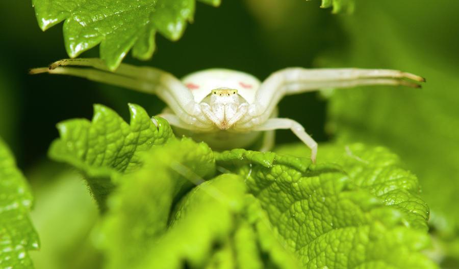 White Flower Spider Photograph