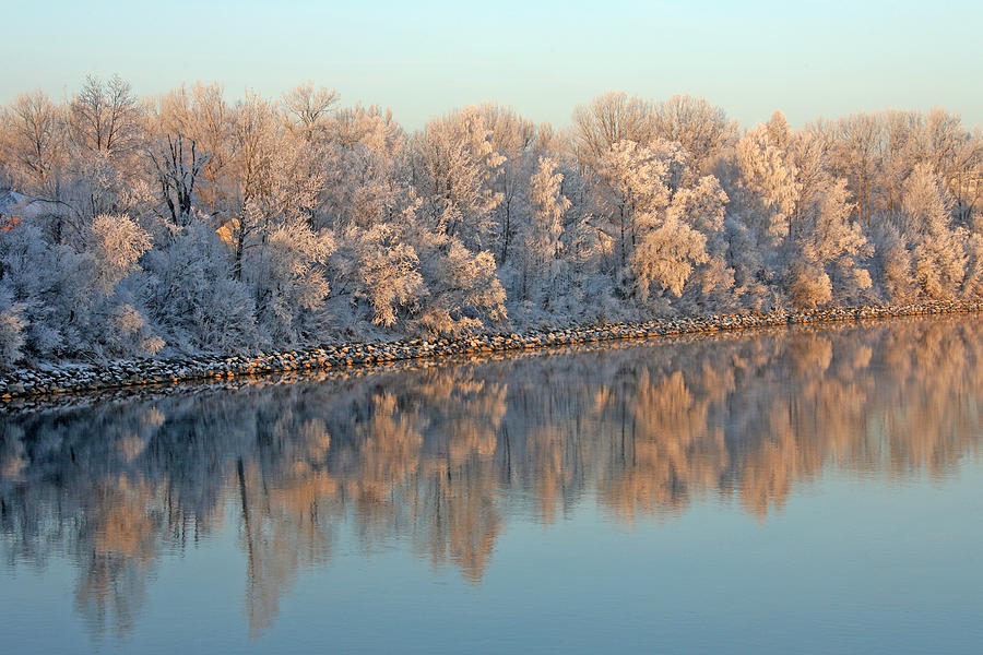 White Frost In Trees Photograph