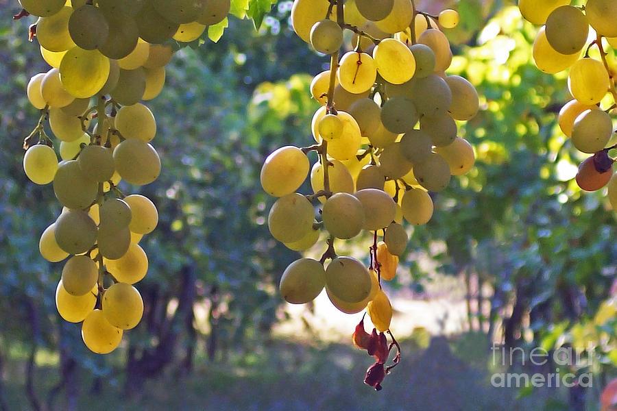 White Grapes Photograph