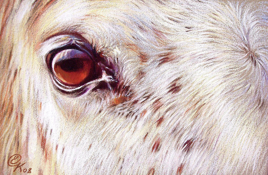 White Horse Close-up Drawing  - White Horse Close-up Fine Art Print