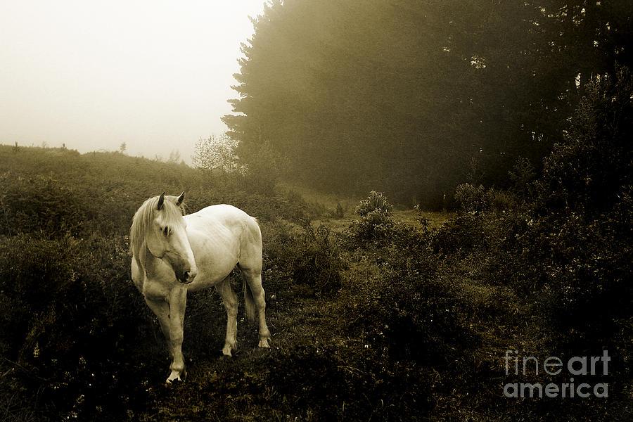 - white-horse-dirk-brink