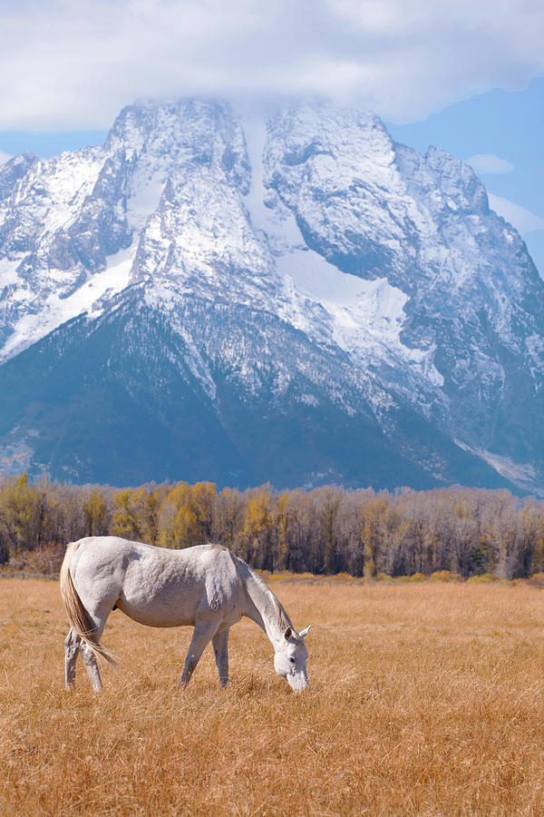 Vertical Photograph - White Horse In Teton National Park Wy Usa by Chasing Light Photography Thomas Vela