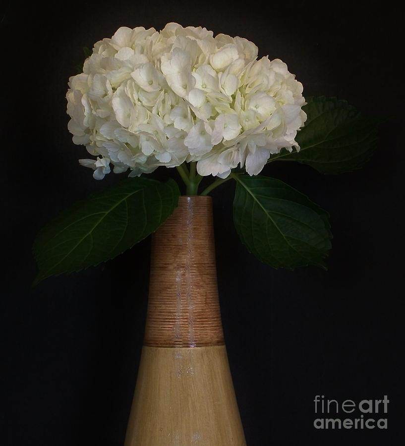 White Hydrangea In Gold Vase Photograph