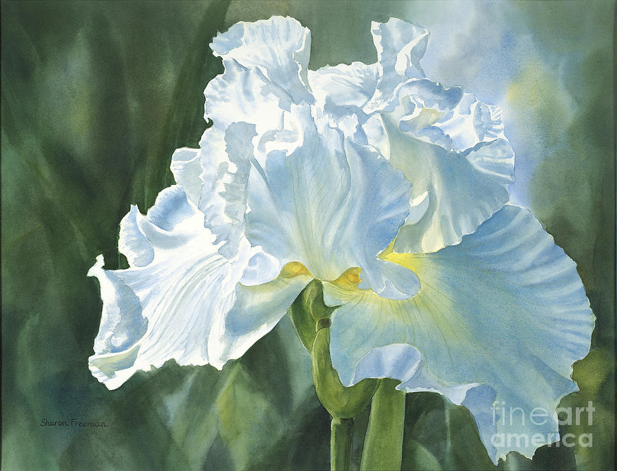 White Iris Painting