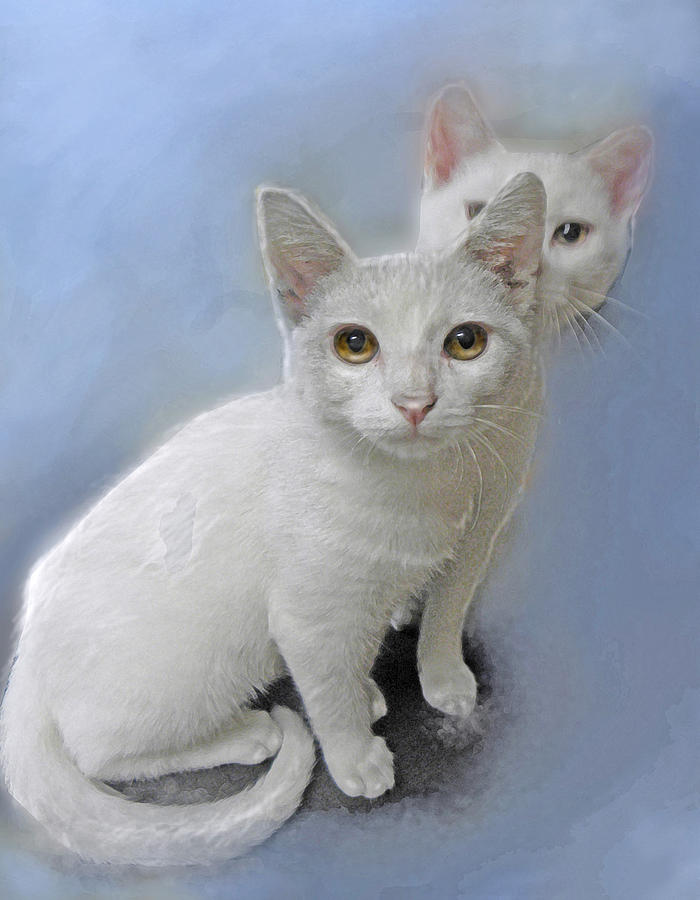 White Kittens Painting  - White Kittens Fine Art Print