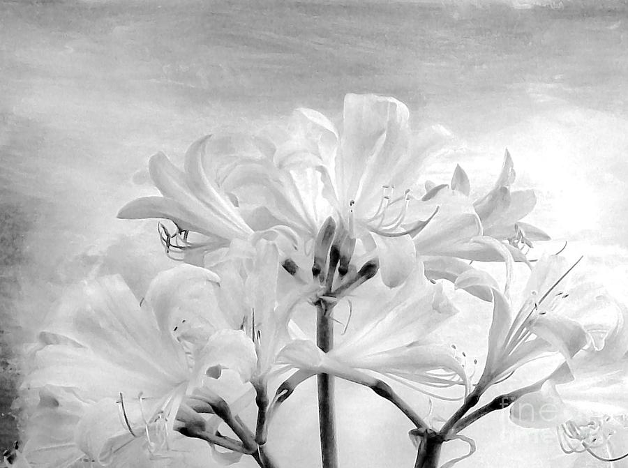 White Lillies Photograph  - White Lillies Fine Art Print