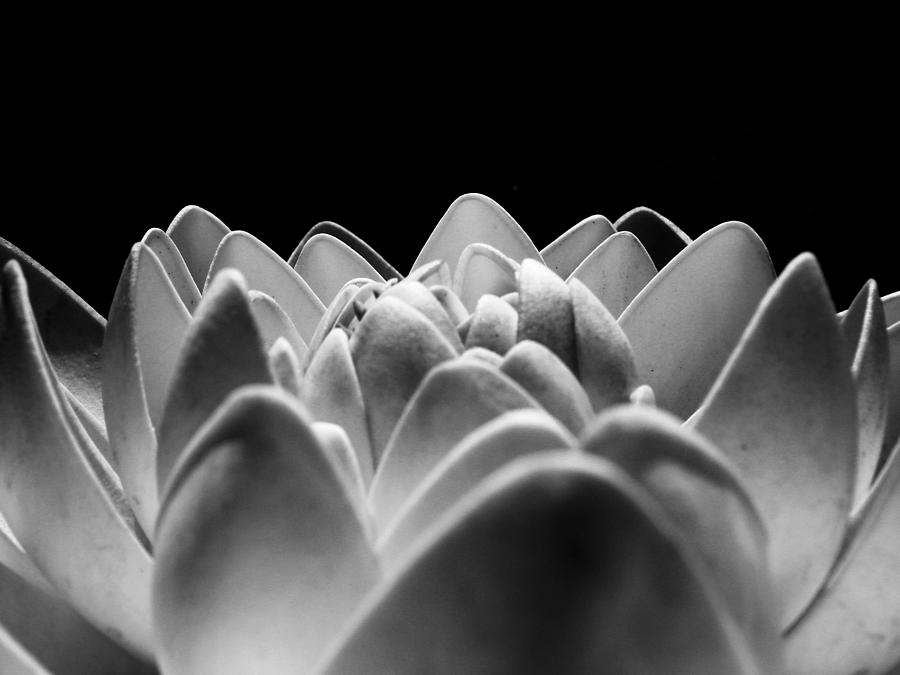 White Lotus In Night Photograph  - White Lotus In Night Fine Art Print