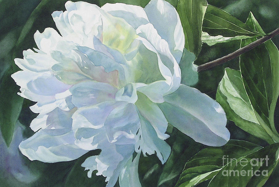 White Peony by Sharon Freeman