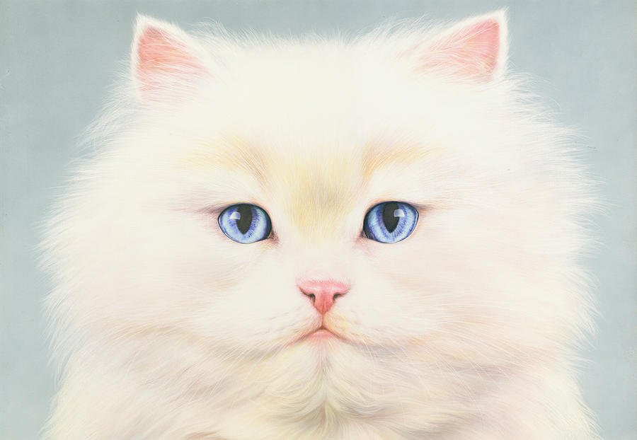 White Persian Photograph  - White Persian Fine Art Print