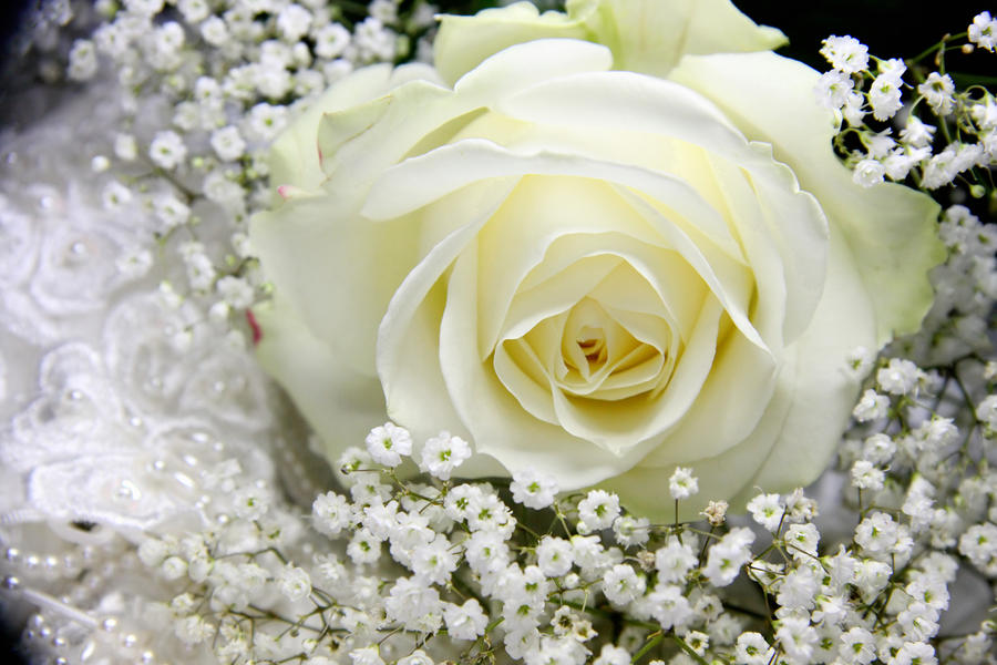 White Rose Wedding Background Photograph White Rose Wedding Background