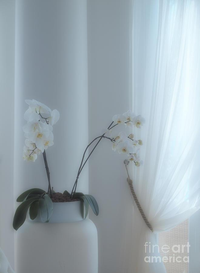 White Series Soft Photograph