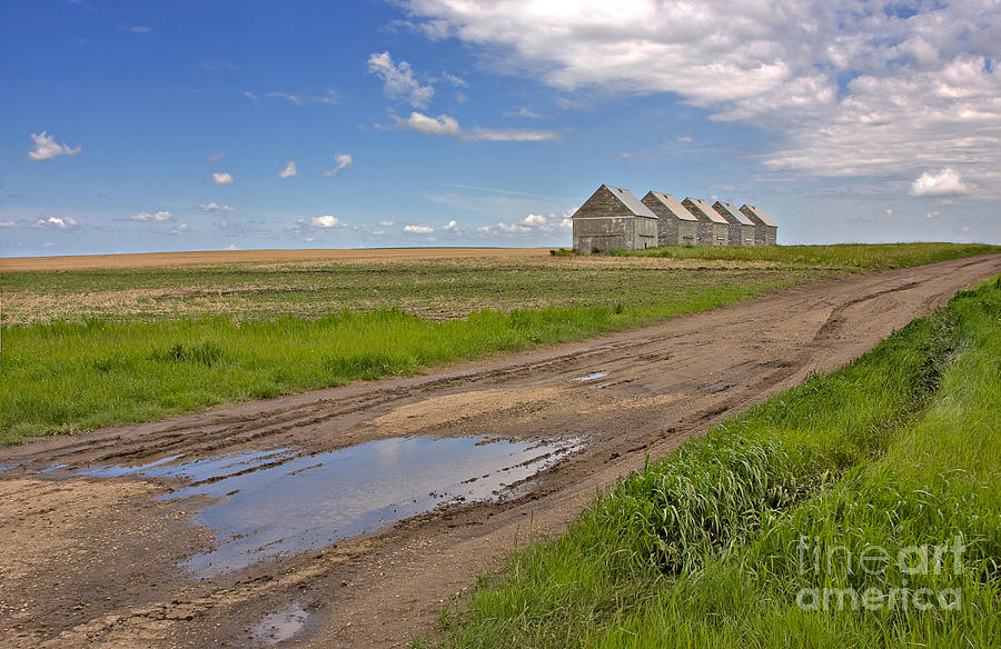White Sheds On A Prairie Farm In Spring Photograph  - White Sheds On A Prairie Farm In Spring Fine Art Print