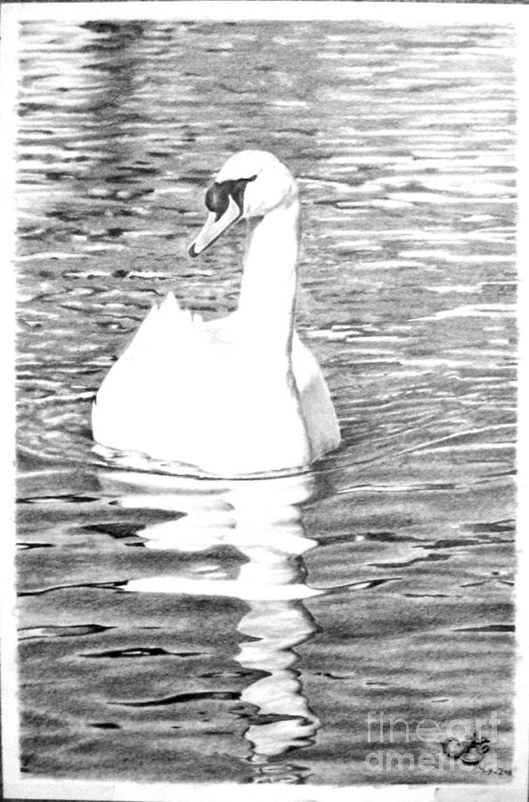 White Swan Drawing