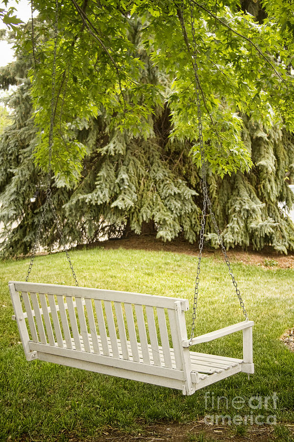 White Swing In The Green Photograph