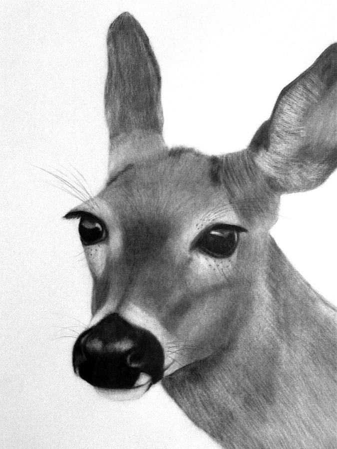 white tailed doe by susan barwell
