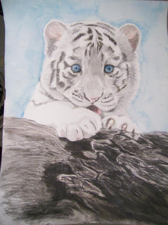 White Tiger Cub Original Wildlife Watercolor Painting By
