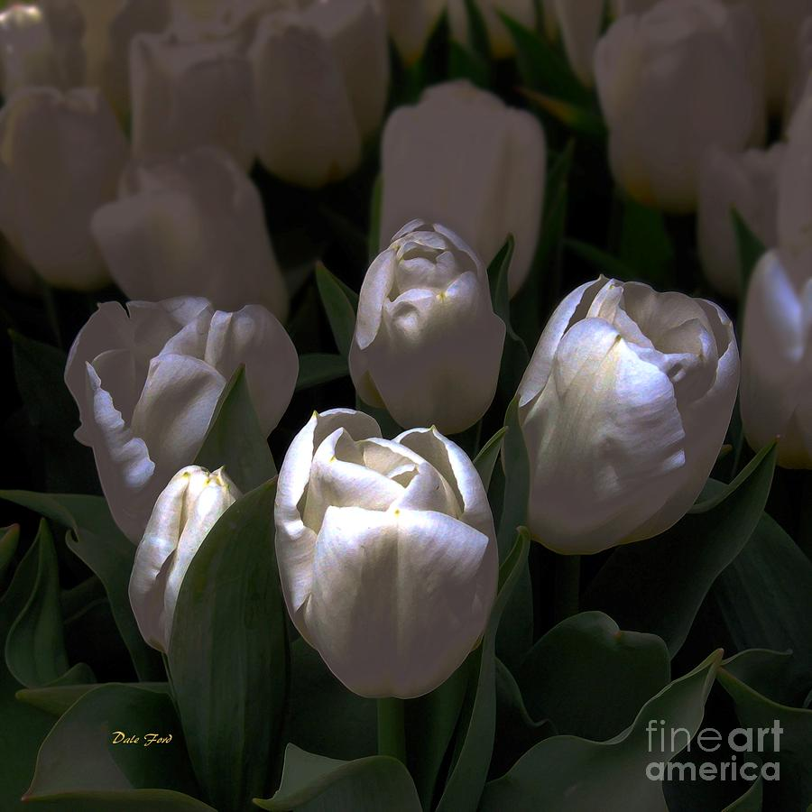 White Tulips Digital Art  - White Tulips Fine Art Print