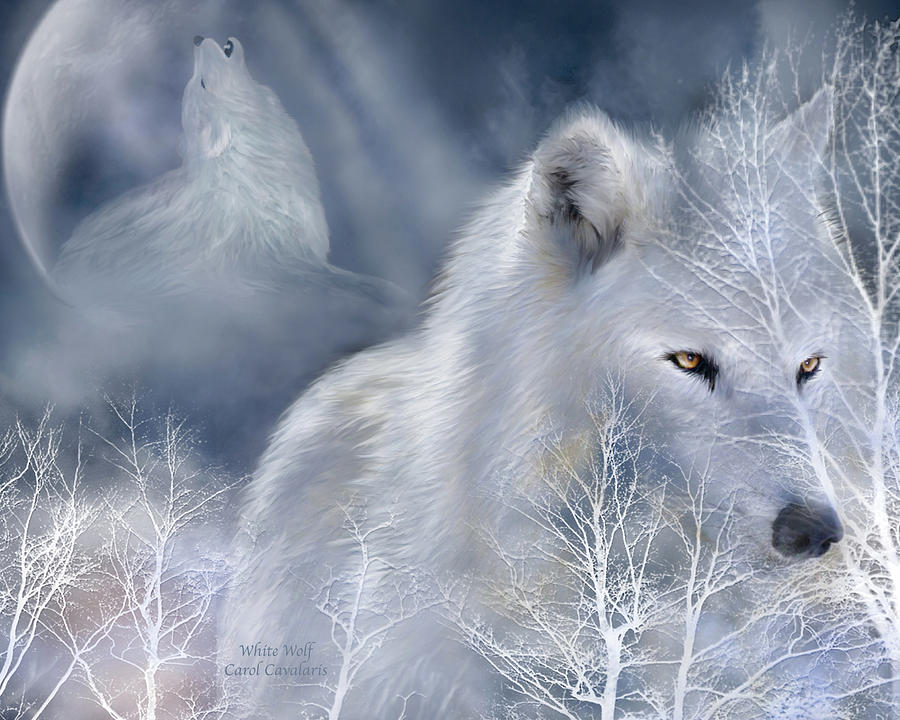 White Wolf Mixed Media  - White Wolf Fine Art Print