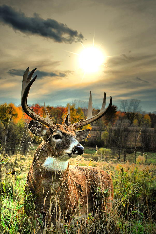 Whitetail Dawning Photograph  - Whitetail Dawning Fine Art Print