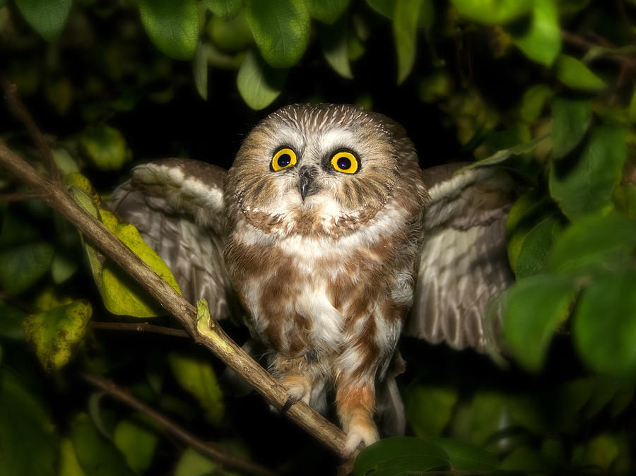 Who Gives A Hoot Photograph  - Who Gives A Hoot Fine Art Print