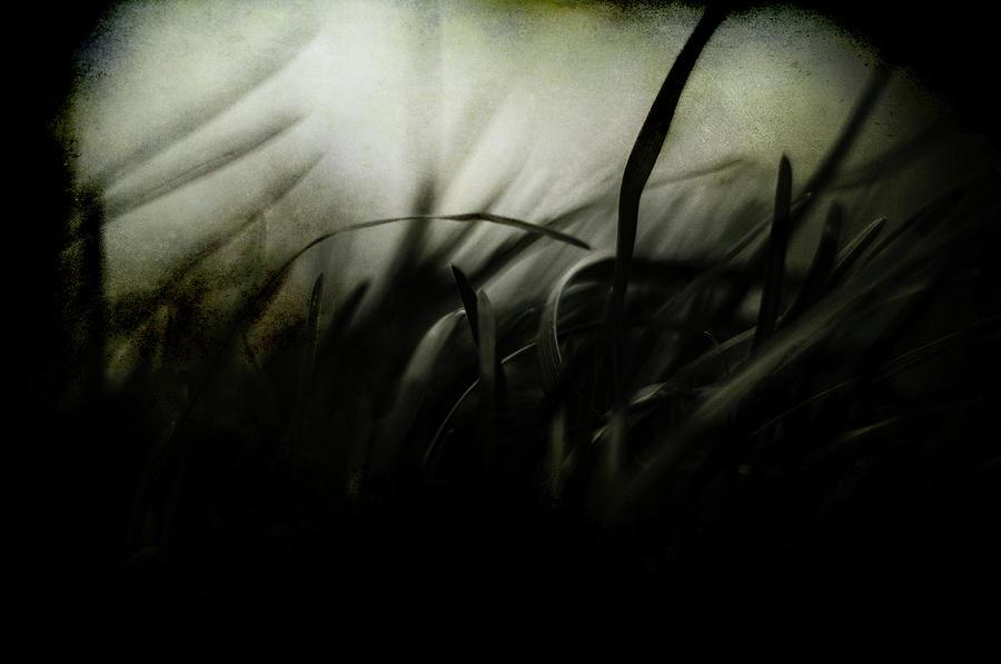 Wicked Garden Photograph