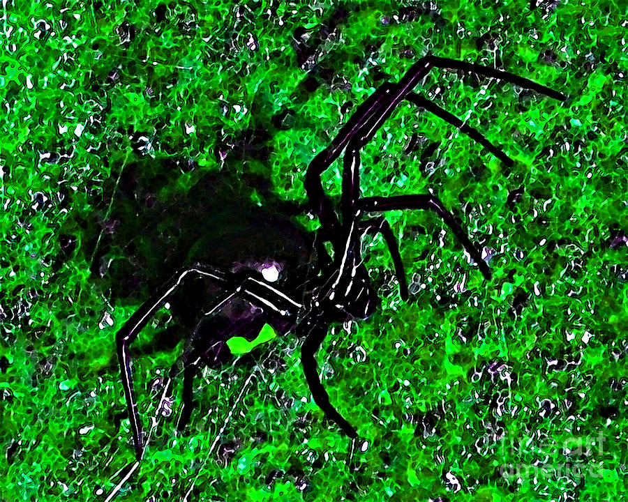 Wicked Widow - Green Photograph  - Wicked Widow - Green Fine Art Print