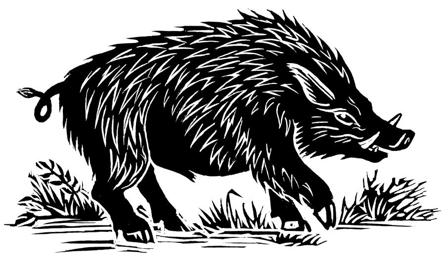 Wild Boar, Woodcut Photograph