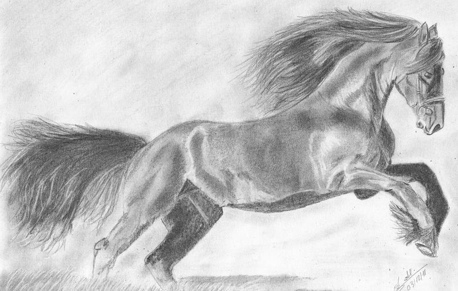 Wild Horse by Annie GODET
