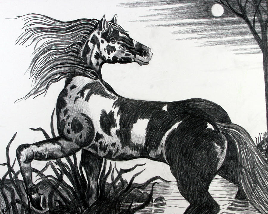 Wild Horse Drawing