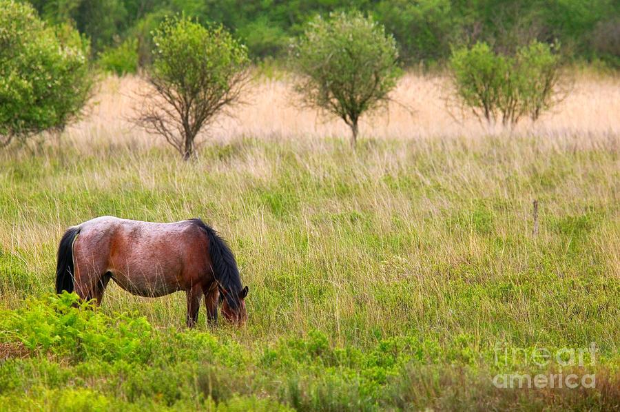 Horse Photograph - Wild Horse Grazing by Richard Thomas