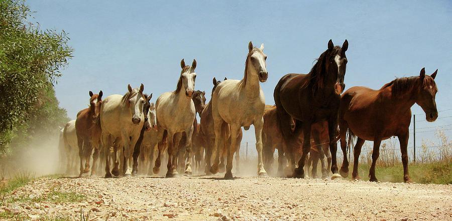 Horizontal Photograph - Wild Horses by Antonio Arcos Aka Fotonstudio Photography