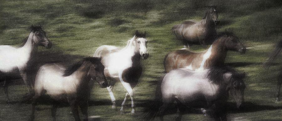 Wild Horses On The Move Photograph