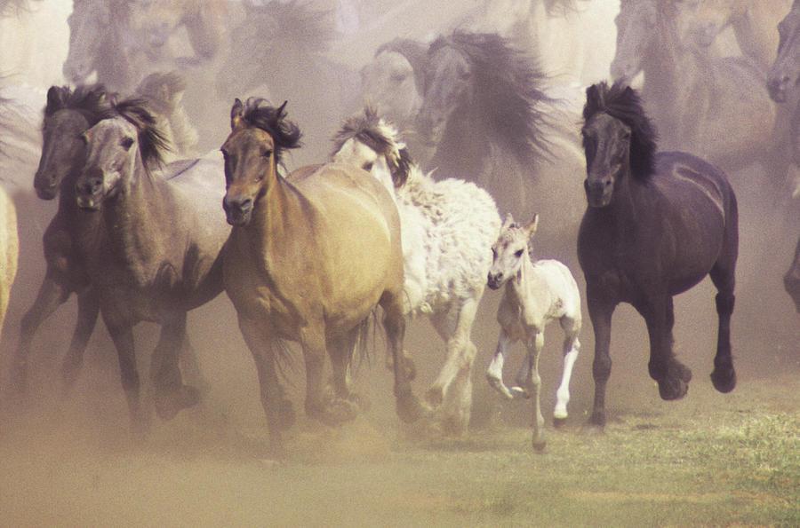 Wild Horses Running Photograph