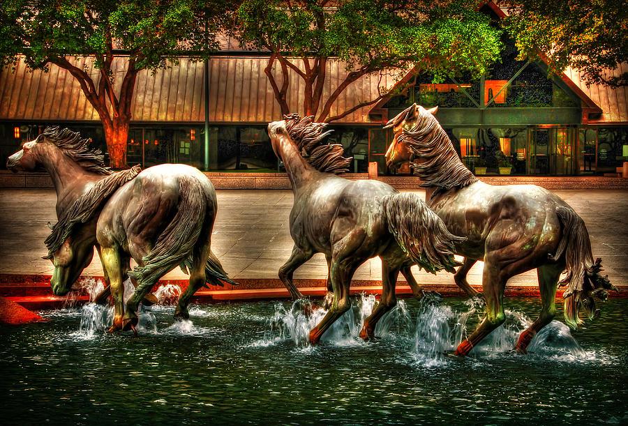 Wild Mustangs Running Across Williams Square Photograph
