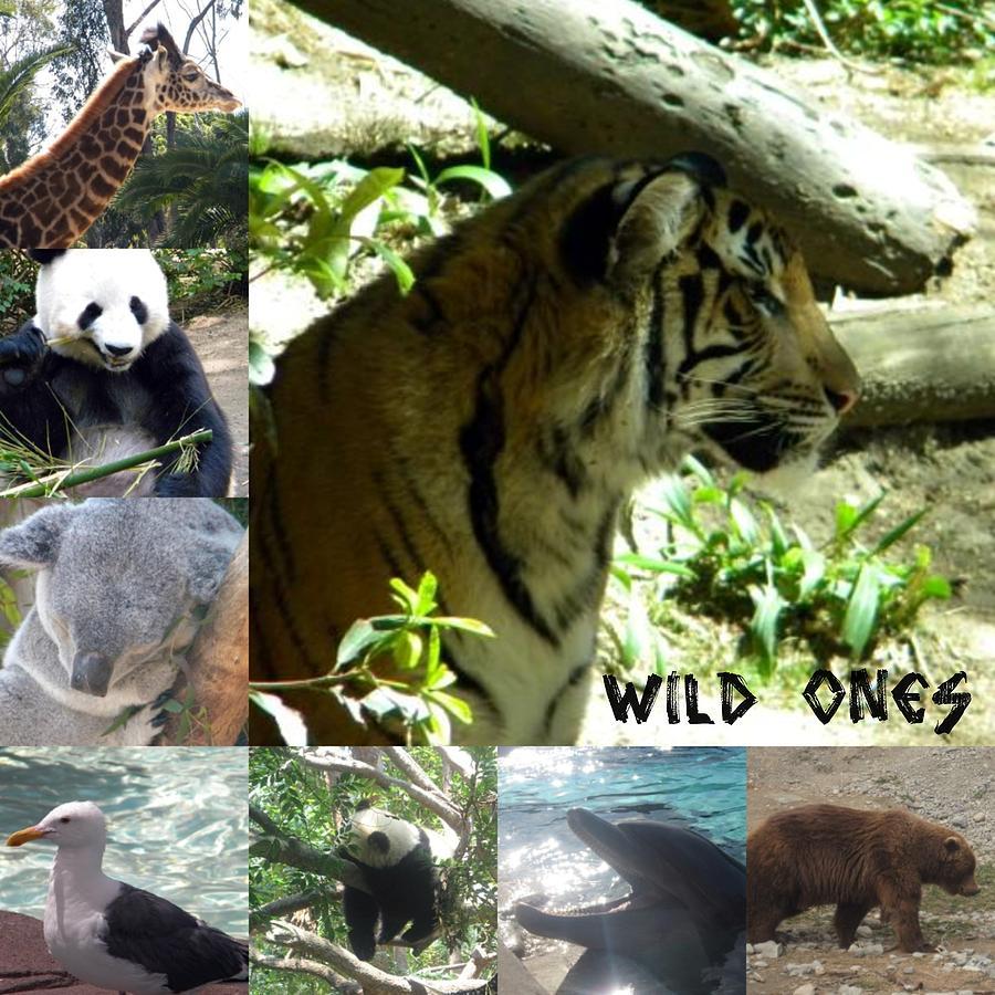 Wild Ones Photograph