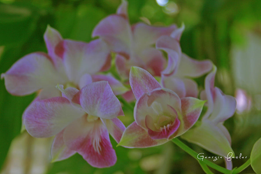 Wild Orchids Photograph