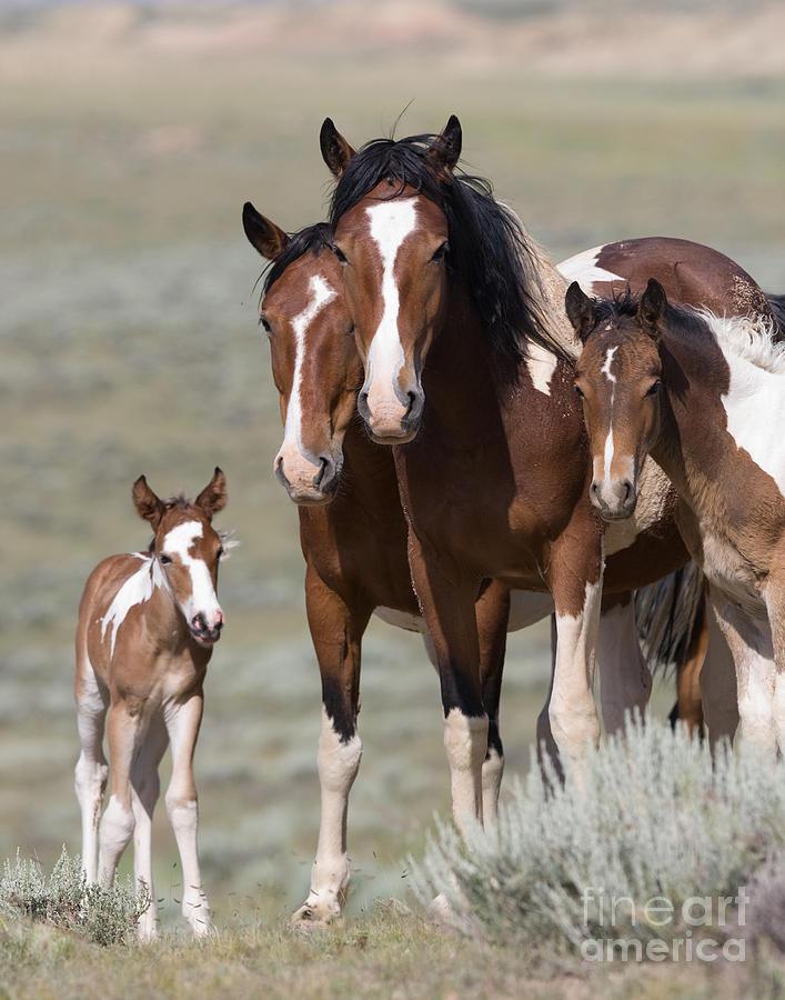 Wild Pinto Family Photograph