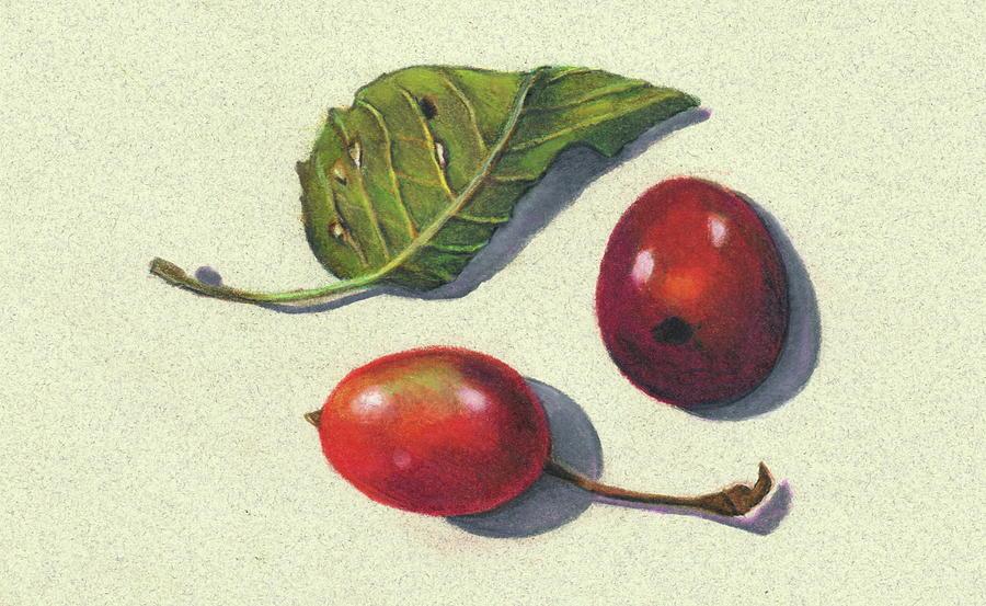 Plum Drawing - Wild Plums And Leaf by Joyce Geleynse