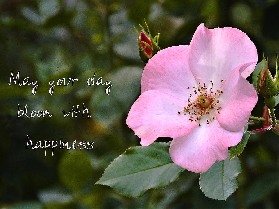 Wild Rose With Quote Photograph