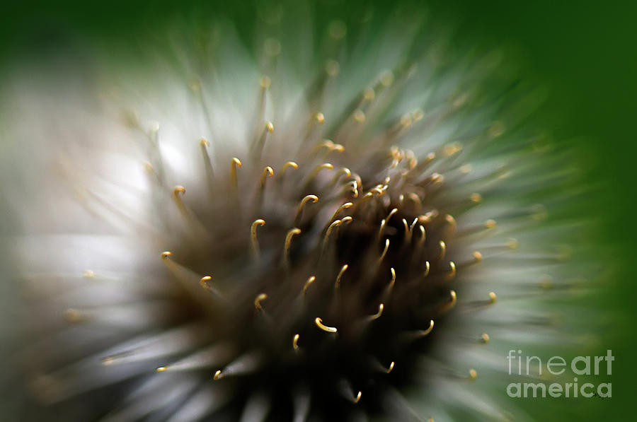 Wild Thing Photograph  - Wild Thing Fine Art Print