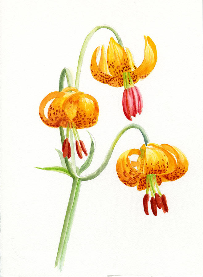 Tiger Lily Painting - Wild Tiger Lilies by Sharon Freeman