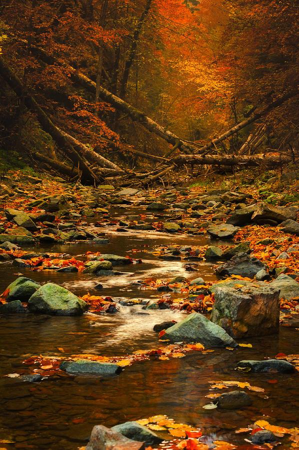 Rocks Photograph - Wild Valley by Irinel Cirlanaru