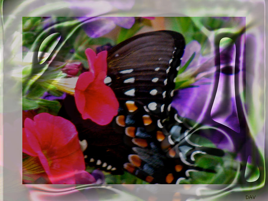 Wild Wings Butterfly Photograph - Wild Wings Butterfly by Debra     Vatalaro