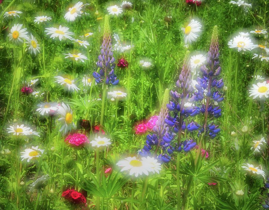 Wildflower Meadow - Abstract Impressions Photograph  - Wildflower Meadow - Abstract Impressions Fine Art Print
