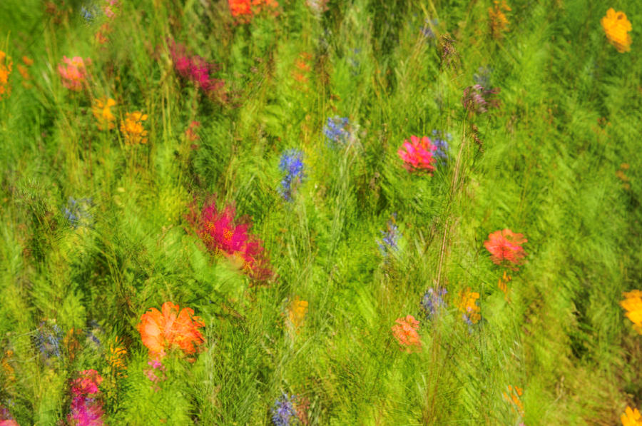 Wildflower Meadow - Impressions Photograph  - Wildflower Meadow - Impressions Fine Art Print