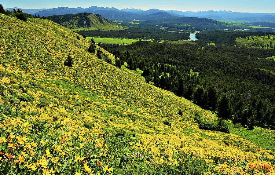 Horizontal Photograph - Wildflower Mountain In Wyoming by Jeff R Clow