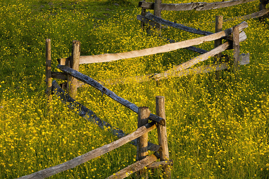 Wildflowers And A Wooden Fence At Photograph
