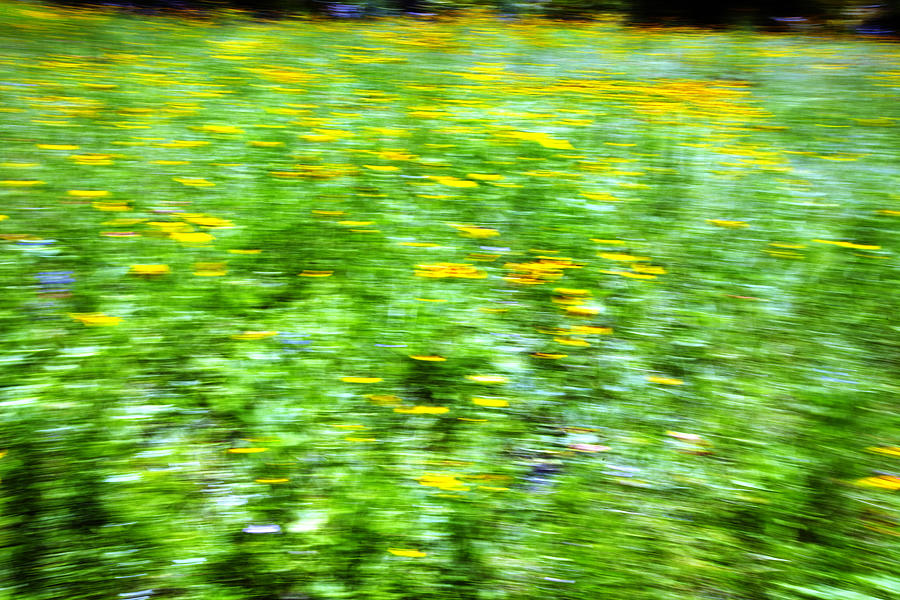 Abstract Photograph - Wildflowers And Wind 2 by Skip Nall