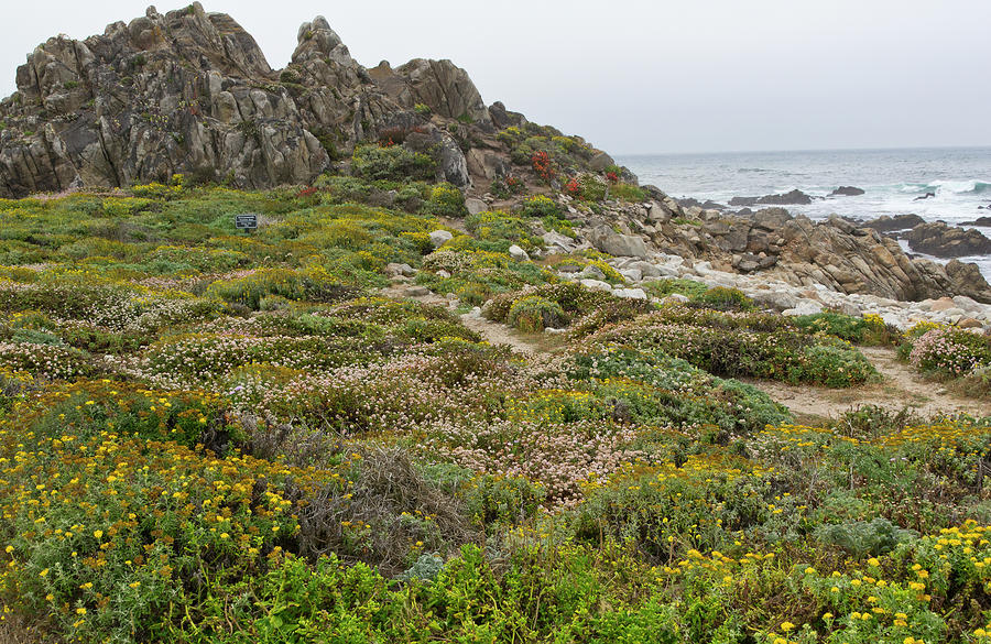 Wildflowers At China Rock - Pebble Beach - California Photograph